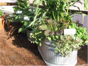 large-containers-apartment-vegetable-garden