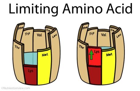 limiting-amino-acid